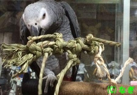 インコの爪切りの方法と、爪とぎにおすすめの止まり木まとめ