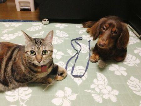インコ 同居 犬 猫 フェレット