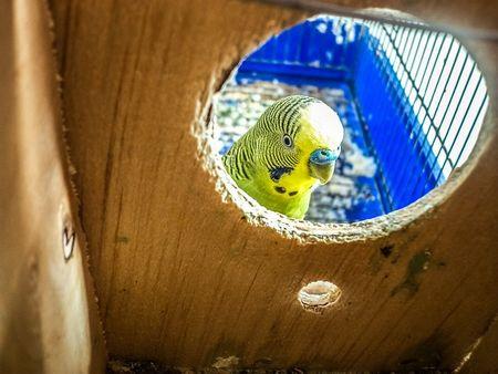 鳥&インコから人に感染する病気や感染症の正しい知識を!
