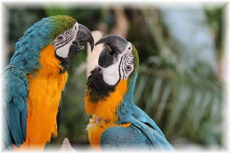鳥の十戒~インコが飼い主をどれだけ好きか~