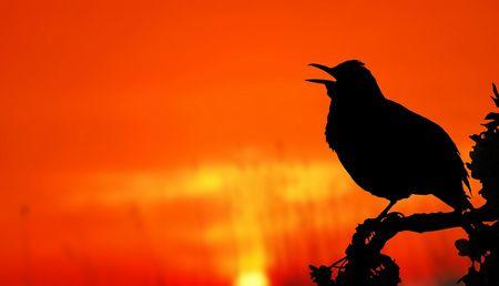 ペットロスを克服する方法。鳥・インコの死から立ち直れない人へ