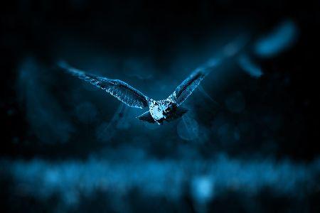 フクロウの元気がない、食欲不振の原因と対処法