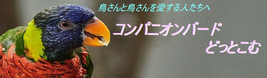 【飼鳥情報サイト】コンパニオンバード