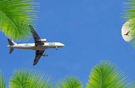 インコの空輸/輸送の費用と注意点!飛行機に乗せる前に絶対確認!