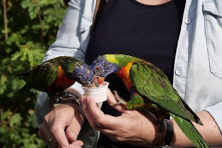 インコに関わる仕事・求人3選!鳥好きにおすすめの仕事はこれ!