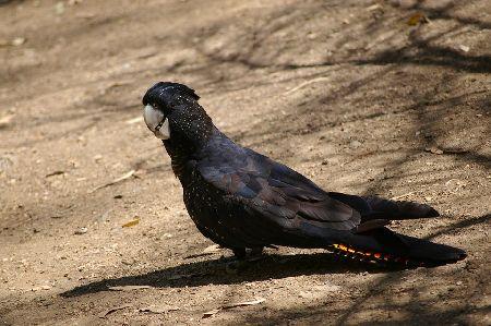 高額!値段の高いインコランキング│とんでもない価格の鳥たち