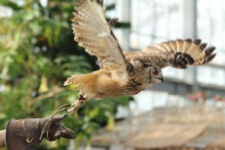 猛禽類(タカ・フクロウ)の訓練方法【初心者向け】