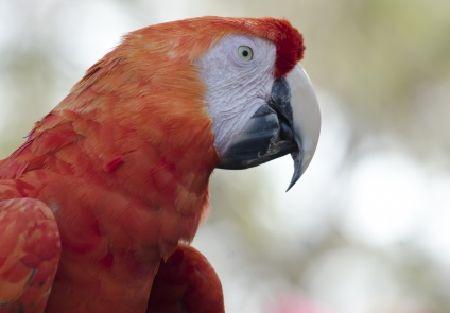 換羽の時期のインコは食欲不振&イライラ。時期と対策まとめ。
