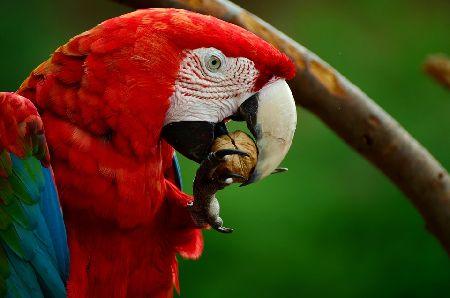 インコのくちばしが伸びる原因と病気。実は様子見は危険!