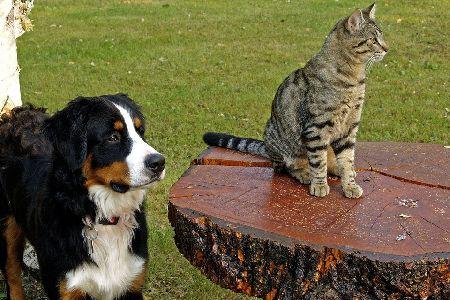インコは飼い主の表情や感情をどれくらい理解しているの?