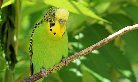 インコ/オウム/小鳥に危険な観葉植物一覧!必読!