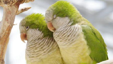 インコのうつ病の症状と対処法。あなたの愛鳥は大丈夫?
