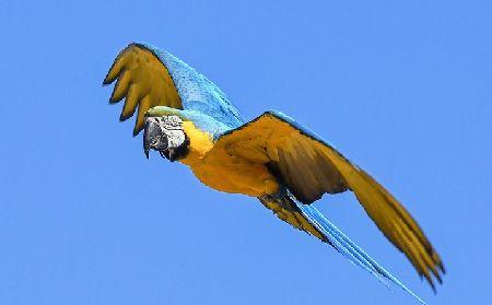 インコの羽根が骨折した時の応急処置と治療費
