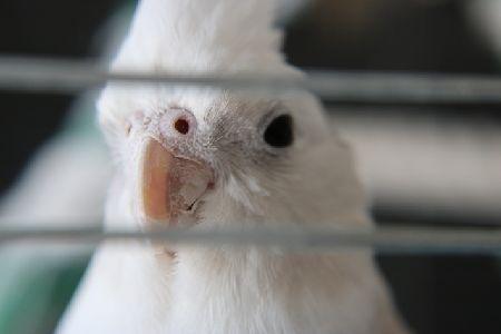 インコの飼育放棄を考える。飼う前に知ってほしいこと。