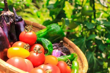 インコに食べさせても良いもの(野菜・果物)一覧【決定版】