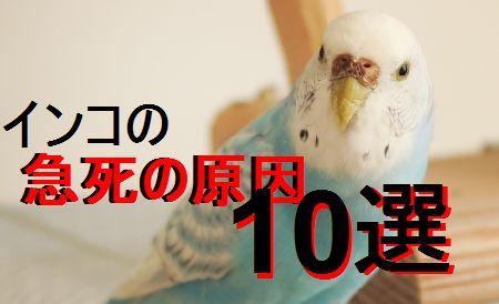 インコが急死してしまう原因10選。アロマ等身近なものが多い!