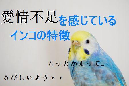 愛情不足を感じているインコの特徴。愛鳥は愛されていますか?