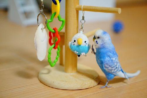 インコがおもちゃを怖がる理由と対処法。実はとても簡単!